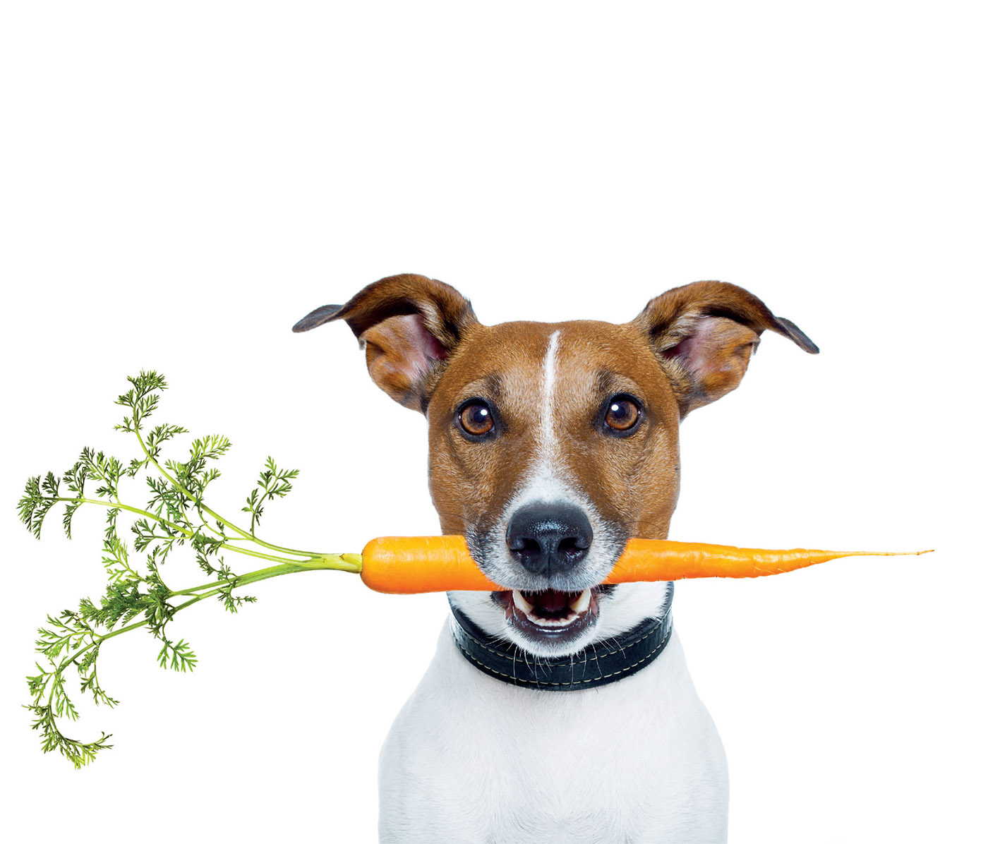 pawTree Pet Food Branding